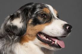 dog tooth infection signs and treatments