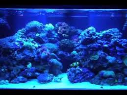 Aquarium Backgrounds Painting Your Aquarium Background Mov Youtube