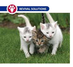 Deworming Cats And Kittens