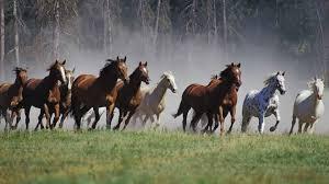 Animals Horses 1920x1080 Wallpaper Animals Horses Hd