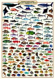 Australian Reef Fish Species Chart 65 Genuine Tasmanian Fish Species Chart