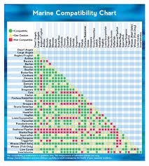 Petco Fish Chart Best Solutions Of Freshwater Fish Compatibility Chart