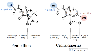 Penicillin And Cephalosporin Cross Reactivity And Risk For