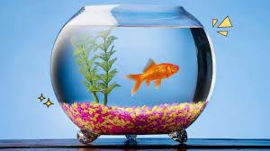 Ikan Hias Air Tawar Yang Tahan Lama
