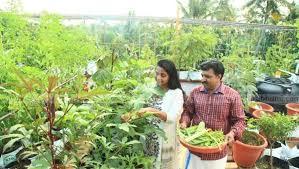 housewife make organic vegetable garden