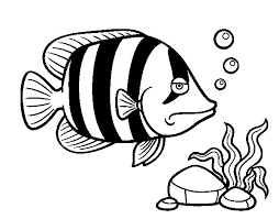 Small Picture Angelfish coloring page Coloringcrewcom
