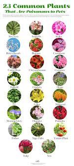 24 Common Plants Poisonous to Pets   Care2 Healthy Living