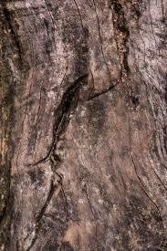 full frame image of ed tree trunk