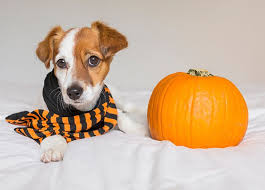 Can Dogs Eat Pumpkin? A Vet Says 'Yes,' but Preparation Is Key