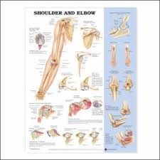 Anatomical Chart Company 1587796139 Mckesson Medical Surgical