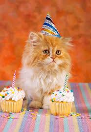 HAPPY BIRTHDAY RAIVIS Images?q=tbn:ANd9GcSNa48f3UyfEm858-Z6d22hmcFwiDlYq0_UlsOiPmZzCeKMXDdp