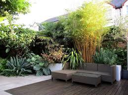 modern tropical garden in devon