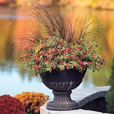 Small Picture Fall Container Designs for Sun or Shade
