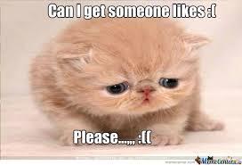 Sad Kitty by kevin.gallego.165 - Meme Center via Relatably.com