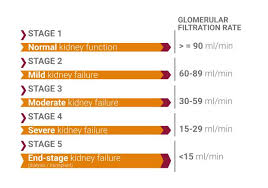 Kidney Disease Stages Chart Chronic Kidney Disease Ckd Flavis