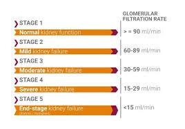 Gfr Kidney Function Chart Chronic Kidney Disease Ckd Flavis