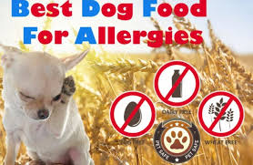 Best Dog Food For Allergies The Guide To Finding The Non