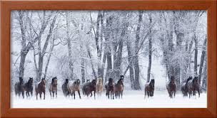 rf quarter horses running in snow at ranch shell wyoming usa february rustic country farmhouse landscape framed print wall art by walker