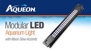Aqueon Led Light Bulbs Led Modular Aquarium Light Fixtures Aqueon