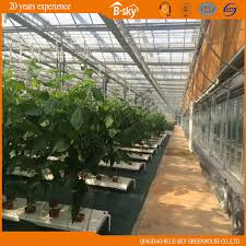 china high cost performance glass greenhouse for planting cuber tomatoes china greenhouse green house