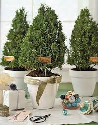 ... Perfect Design Small Potted Christmas Trees 144 Best Rosemary Images On  Pinterest Garden Ideas Gardening ...