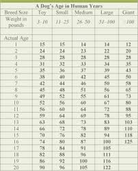 Dog Age Chart By Breed Your Dogs Age In Human Years Is A Myth 3 Million Dogs