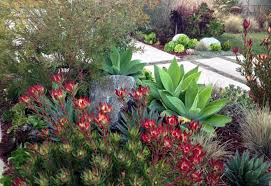 drought resistant garden. Wonderful Drought A Colorful Succulent Flowerbed With Drought Resistant Garden