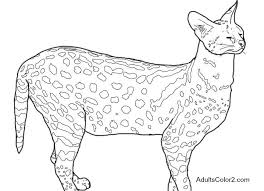 Small Picture Zoo Coloring Pages Free Admittance