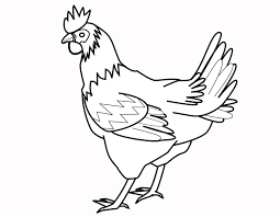 The Agency Of The Big Chicken