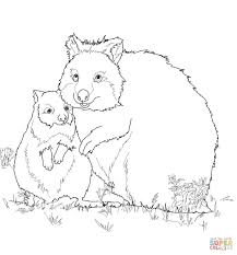 quokka animal coloring pages