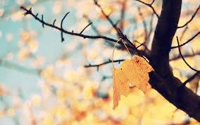 50+] Autumn iPhone Wallpaper Tumblr on ...