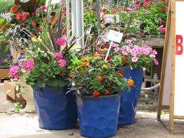 Flower Pots Ideas for Front Porch : Attractive Front Porch Flower Pots  Design With Blue Painted