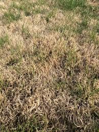 Grass Identification Lawnsite