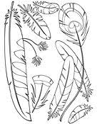 Small Picture Ask A Biologist Coloring Page Feather Type Anatomy Worksheet