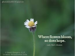 Quotes About Flowers Blooming Custom Bloom Quotes Interesting Best 48 Flower Bloom Quotes Ideas On