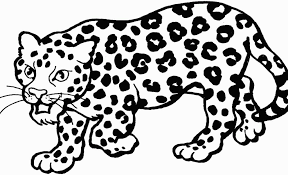 Leopard Coloring Free Snow Leopard Coloring Pages Sleeping Time Free