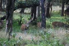Image result for  Safari In Ranthambore