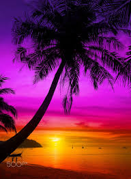 palm tree silhouette on tropical beach at sunset