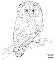 Small Picture birds owls Great Grey Owl owls coloring pages for kids
