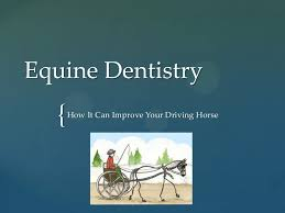 Dentistry How It Can Improve Your Driving Horse