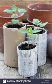 old clay pots wooden seed trays and home made biodegradable paper pots containing young plants