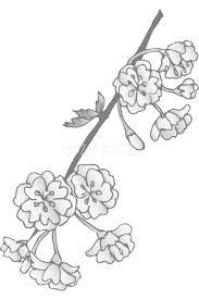グレースケールの桜の花しだれ桜無料 白黒イラスト83154 素材good