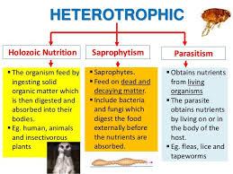 Types Of Heterotrophic Nutrition A Plus Topper
