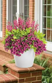 Image Result For Flower Pot Ideas For Front Porch Pinterest Container Garden Ideas For Front Porch