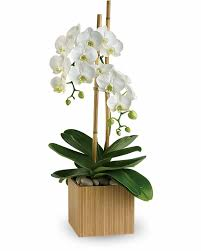 ont orchids standard