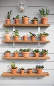 succulents plant wall