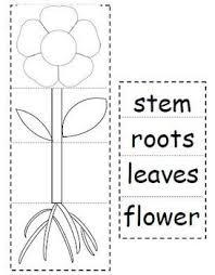 Flip Book With Photos Plant Parts Flip Book By Courtney Quinlan Teachers Pay Teachers
