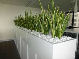 office planter. Planting Idea - Storage Separating Boardroom From Office Planter Box Of Mother In Law\u0027s Tongue For A Corporate Room Divider.