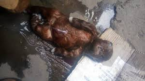 Image result for goat gives birth to human in niger