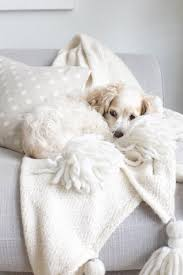animal friendly furniture. Kathy Kuo Home Pet Friendly Furniture Animal